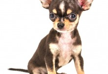 Nuts That Are Unsafe For Your Chihuahua To Eat