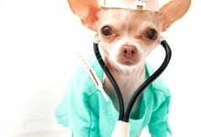 Chihuahua Vaccines