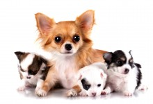Puppy prepping: getting your home ready for a new arrival