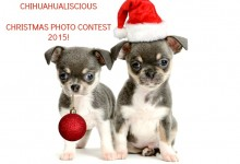 ChihuahuaLiscious Christmas Photo Contest 2015