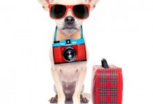 Hot Weather Tips For Your Pet