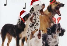 Animals Of YouTube Sing Jingle Bells