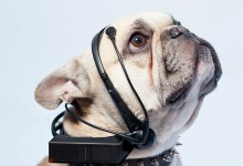 The headset that can read your DOG'S MIND