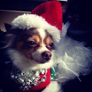 Festive-Pup