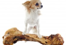 Are Table Scraps Safe For Your Dog?