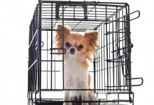Crate Training: The Benefits For You And Your Dog