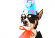 How To Make a Dog Birthday Cake